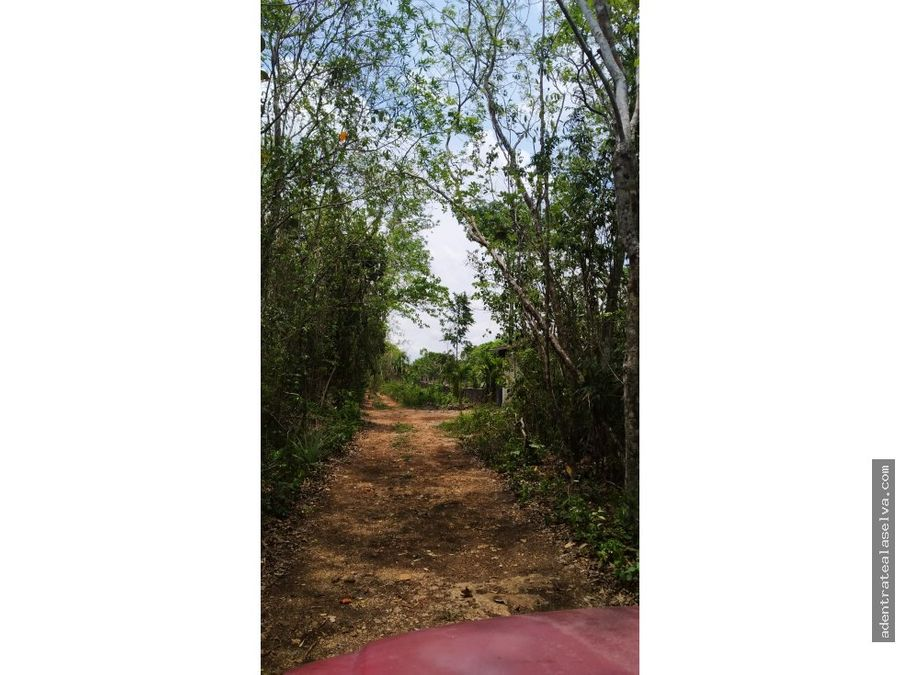 lote de 3 hectareas cerca hermoso cenote leona vicario
