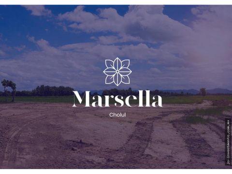 marsella macrolote