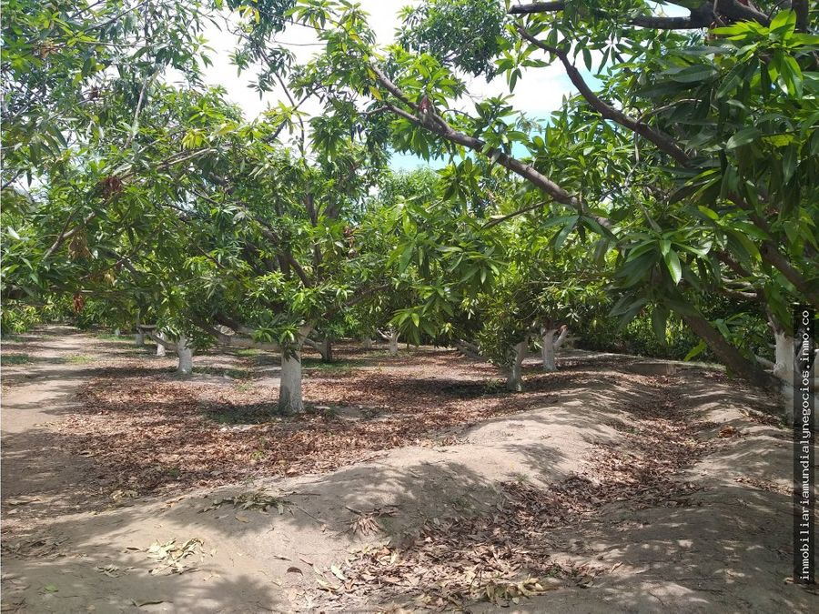 vendo finca de mangos en santa marta 001