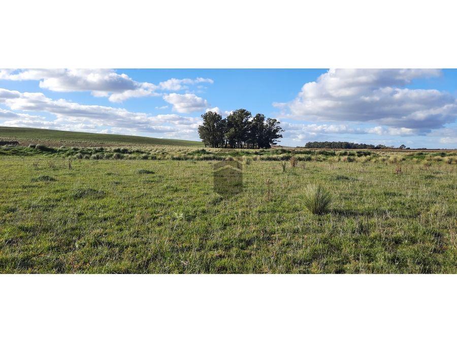 campo agricola ganadero de 50 ha cerca de dos naciones