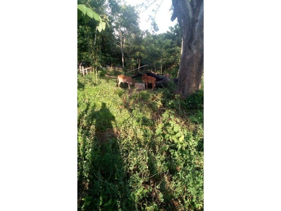 terreno de uso mixto en venta municipio de la union sucre