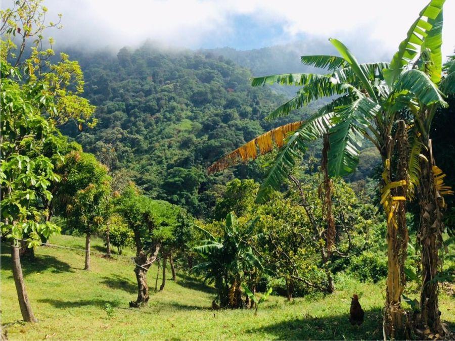 se vende finca cafetera 62 ha con rio cienaga santa marta colombia