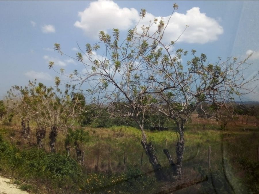 se vende finca de 6 ha en canaveral turbaco bolivar colombia