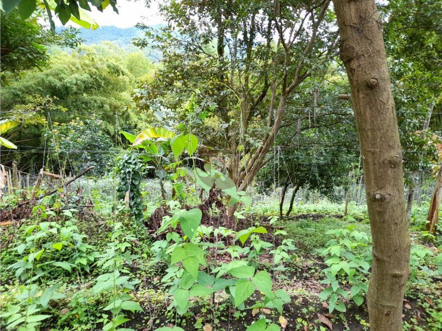 vendocasalotecon area de 3916 mts2 para construir casas o sembrar