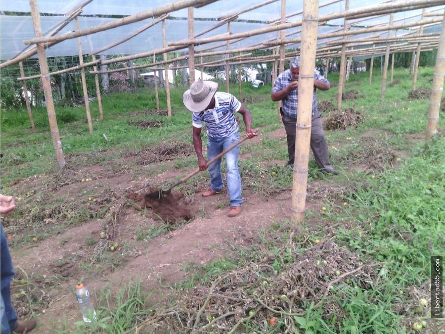 se vende finca 37 hectareas a 20millones hectares piendamo