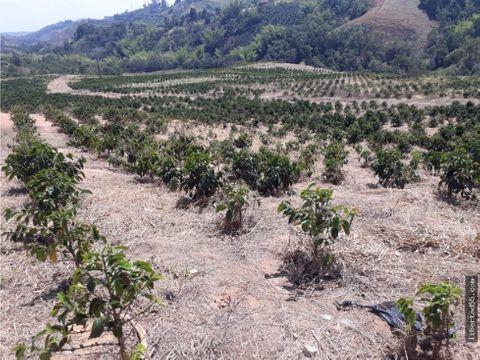se vende parcelas de1000m2 o hectareas en piendamo cauca popayan