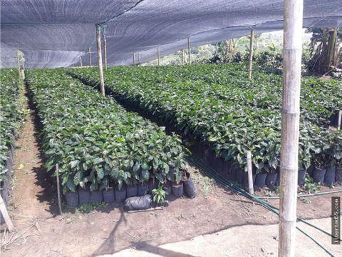 venta finca granja piendamo cauca popayan colombia