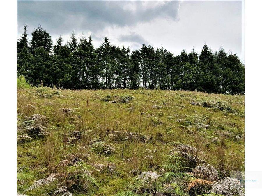 venta lote de 6060 m2 guarne antioquia