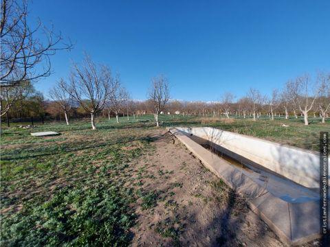 vendo terreno plano con arboles nogales en tierras blancas