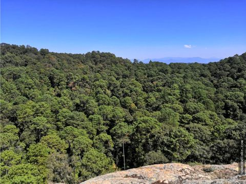 terreno en el bosque