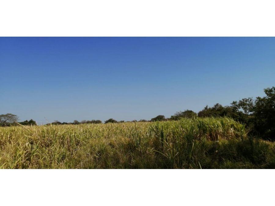 terreno 99 plano de 30 manzanas para cana de azucar u otros cultivos