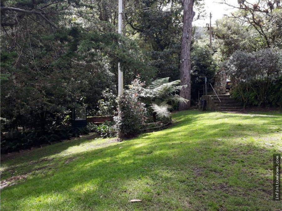 bosque de pinos con terraza