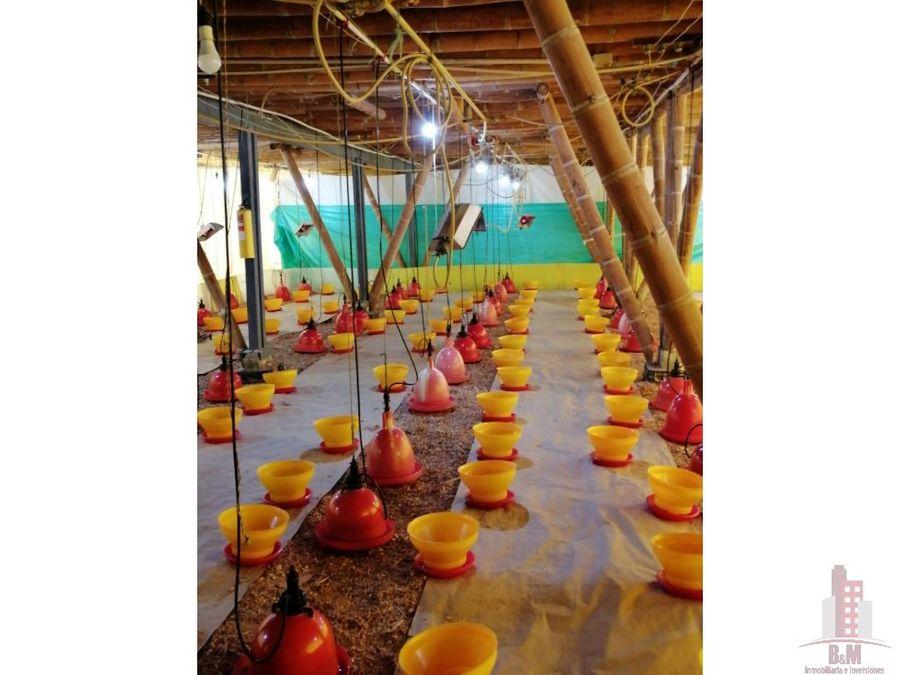 finca en venta santander de quilichao