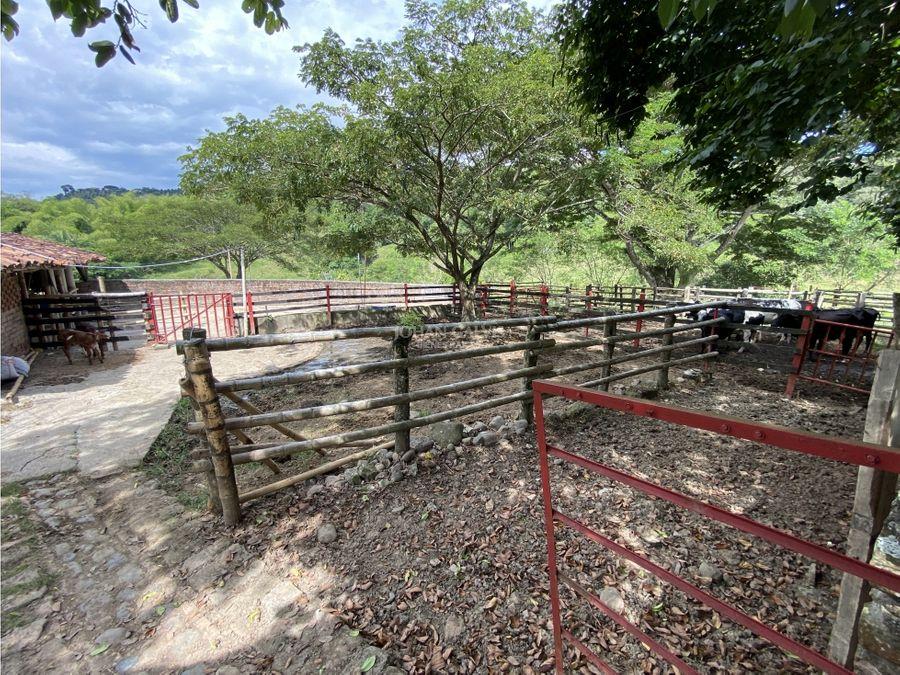 venta finca en puerto alejandria quimbaya 83c