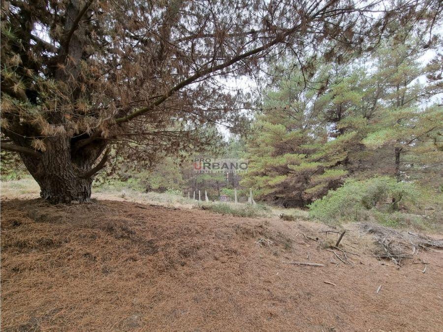 venta en blanco proyecto 6 lotes en los pinos