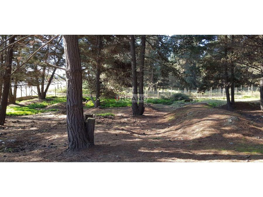 pano inmejorable ubicacion los pinos renaca