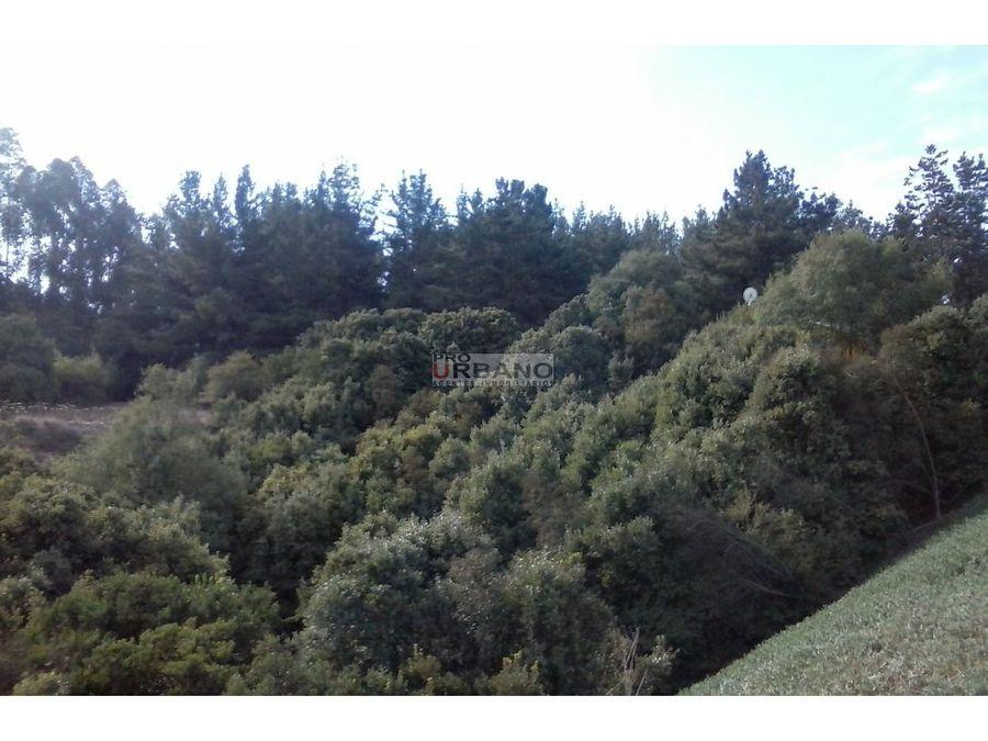 terrenos en los pinos