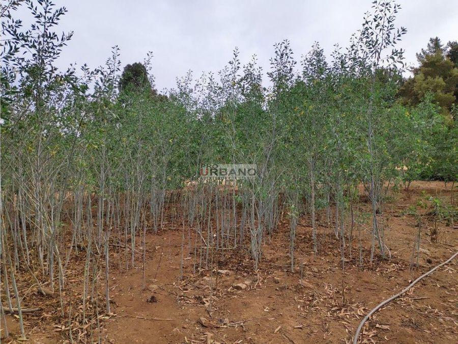 alta plusvalia terreno en los pinos