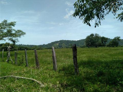terreno guayabal de cochea chiriqui