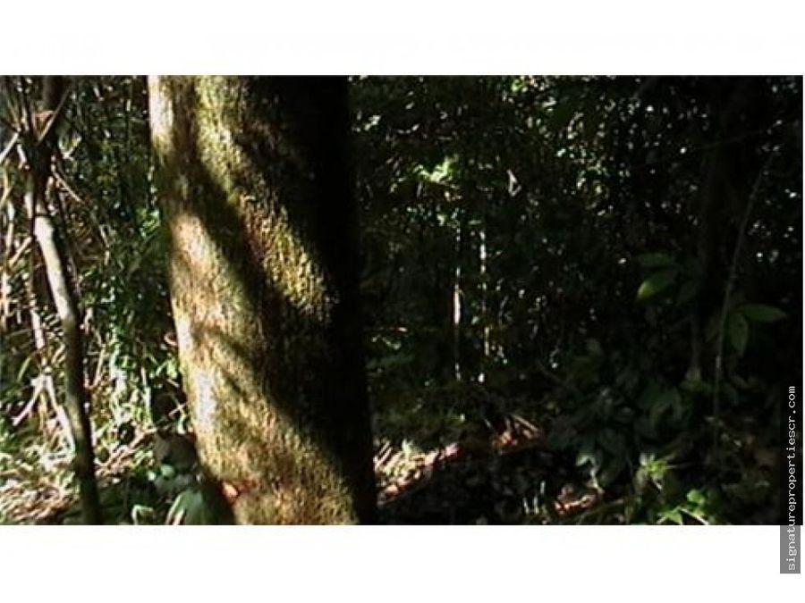 finca de 29 hectareas tarcoles