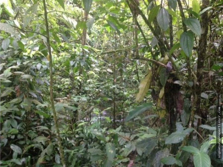 finca con reserva biologica forestal sarapiqui