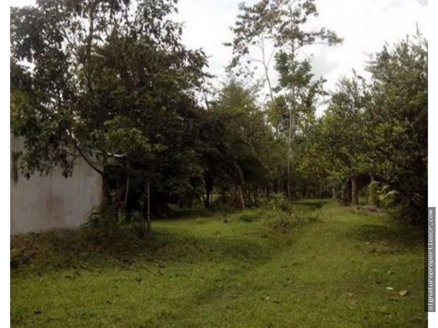 terreno 100 plano apto para agricultura guacimo