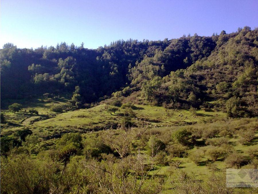 terreno de 4 has en sector tapihue casablanca valparaiso