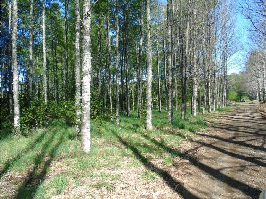 lindo campo de 40has en venta a 22kms de villarrica camino loncoche