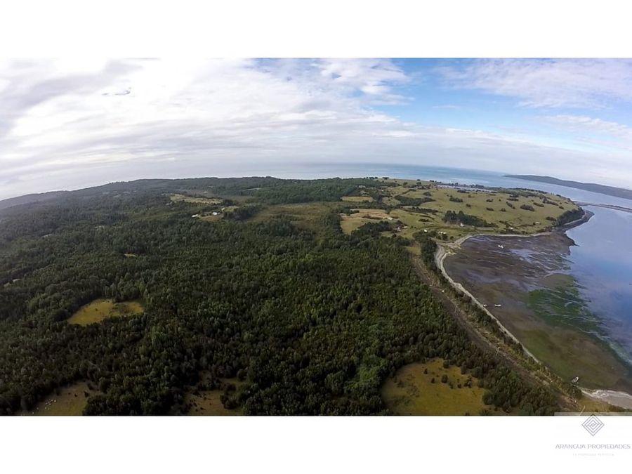 campo virgen de 1914 has en isla cailin sector yelcho