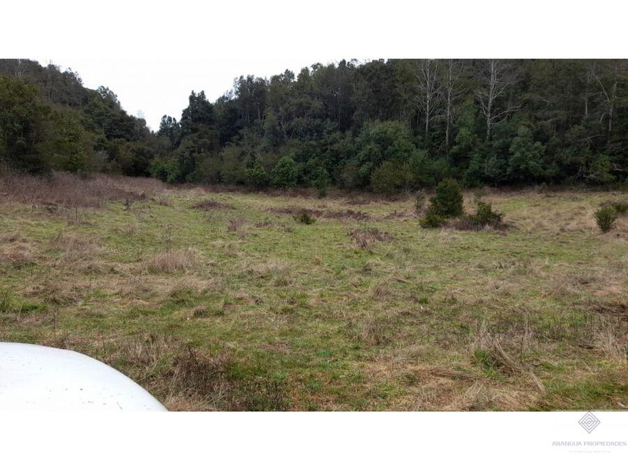 precioso campo de 125 has en venta en gorbea cerro lau lau