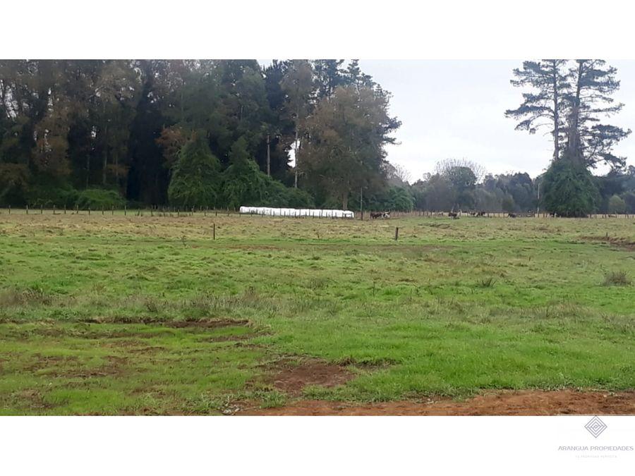 campo de 50ha en venta a 10km de freire con orilla de laguna