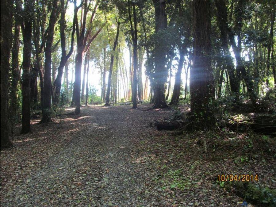 campo en venta a 22 kms de villarrica