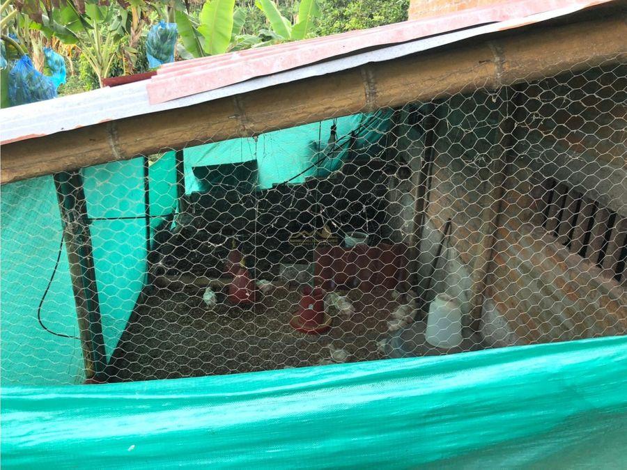 finca en venta vereda balcones quimbaya