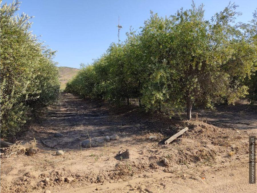 parcela condominio fundo el olivo