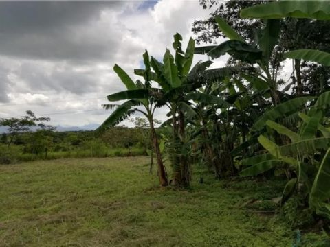 vendo lote de terreno las palmas veraguas