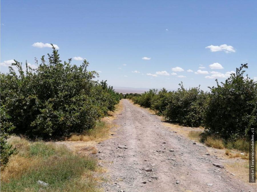 se vende parcela con arboles frutales
