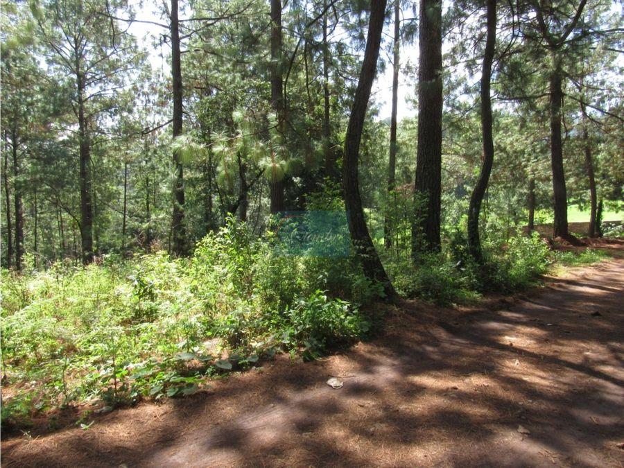 terreno rodeado de bosque