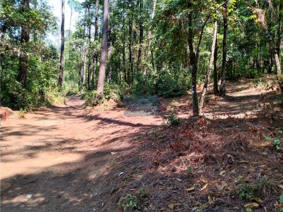 terreno con bosque en go kart
