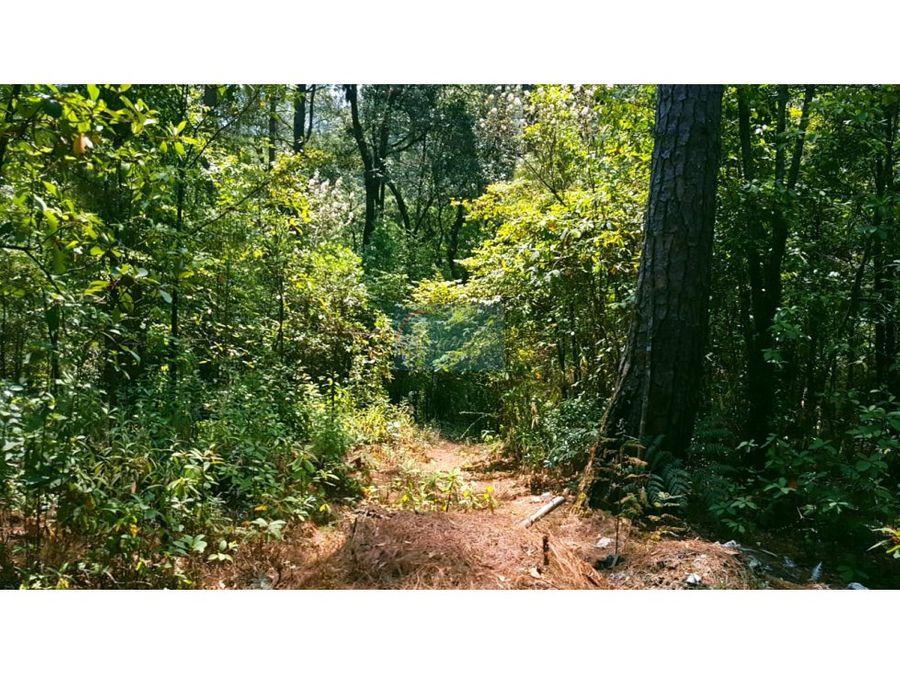 amplio terreno boscoso