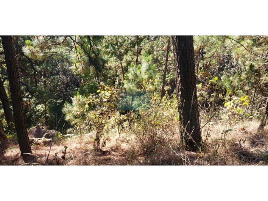 terreno dentro del bosque
