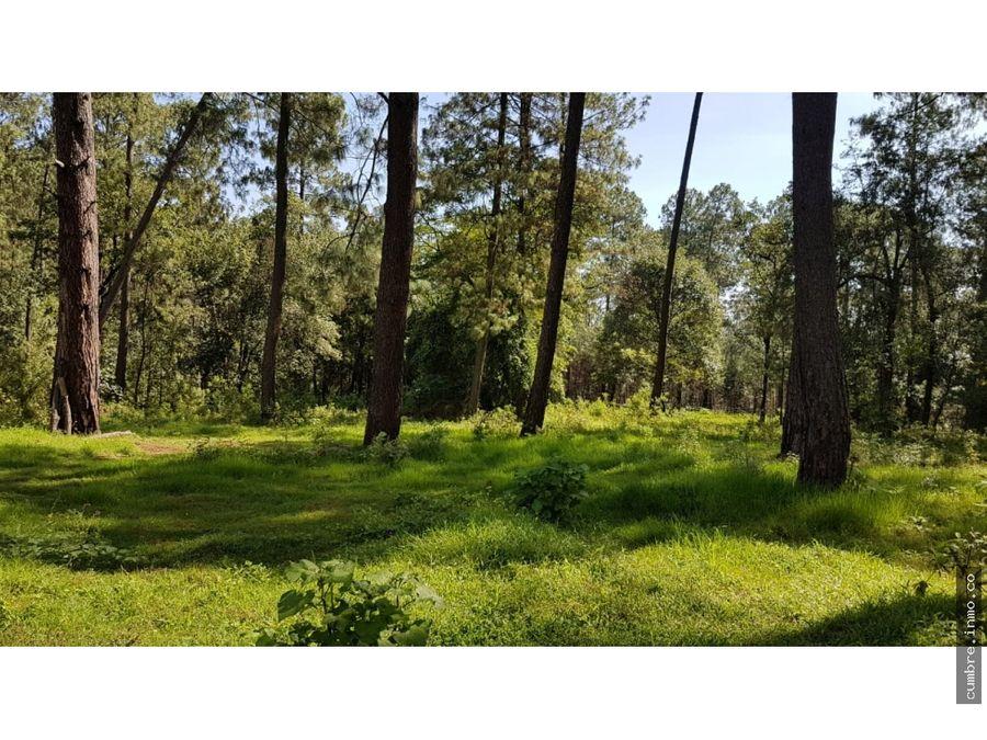 bosque natural cerro gordo