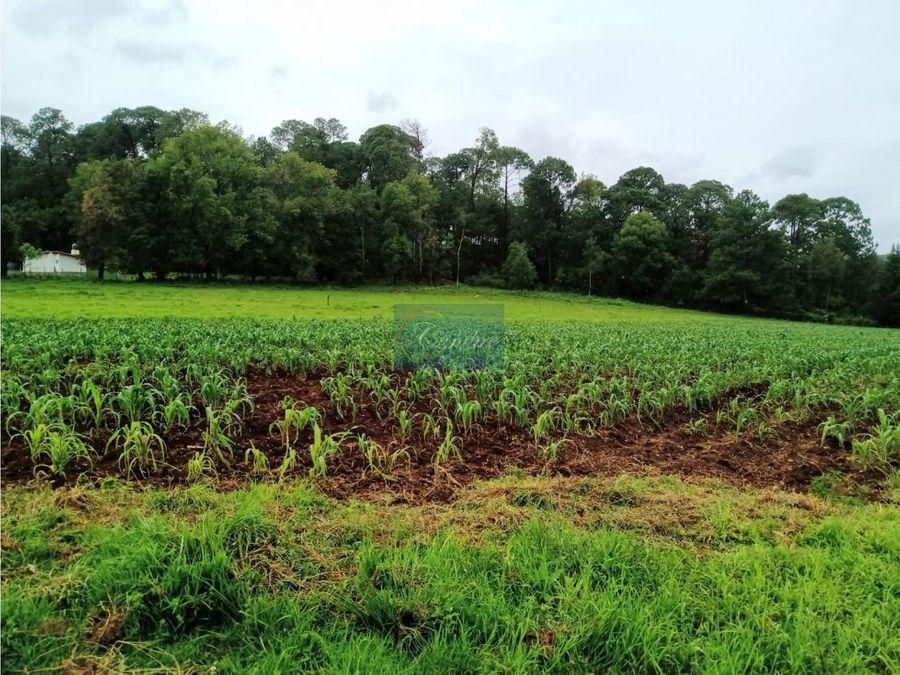 35 hectareas en cerro gordo