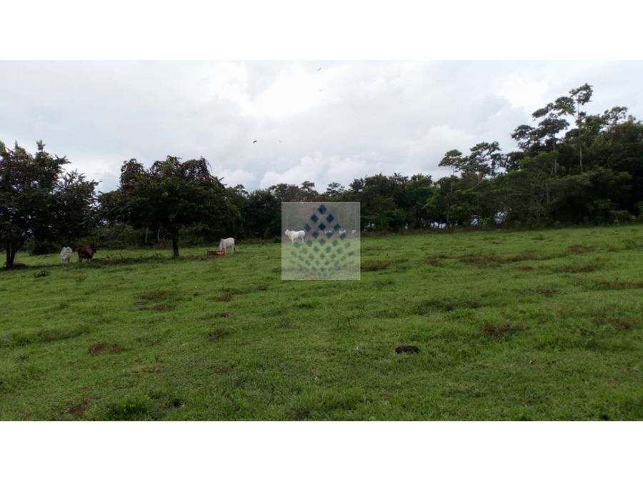 rancho en venta 459 hectareas emiliano zapata tabasco