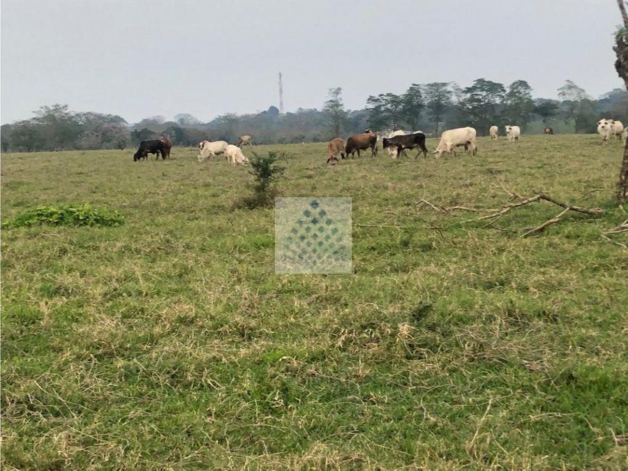 rancho en venta 24 hectareas a orilla de carretera vhsa tabasco