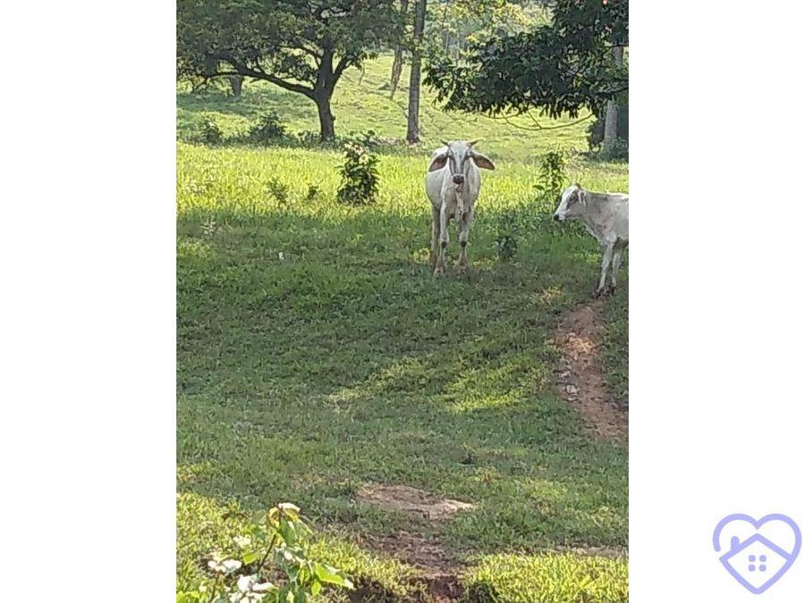 19 hectareas de terreno en venta en reforma chiapas