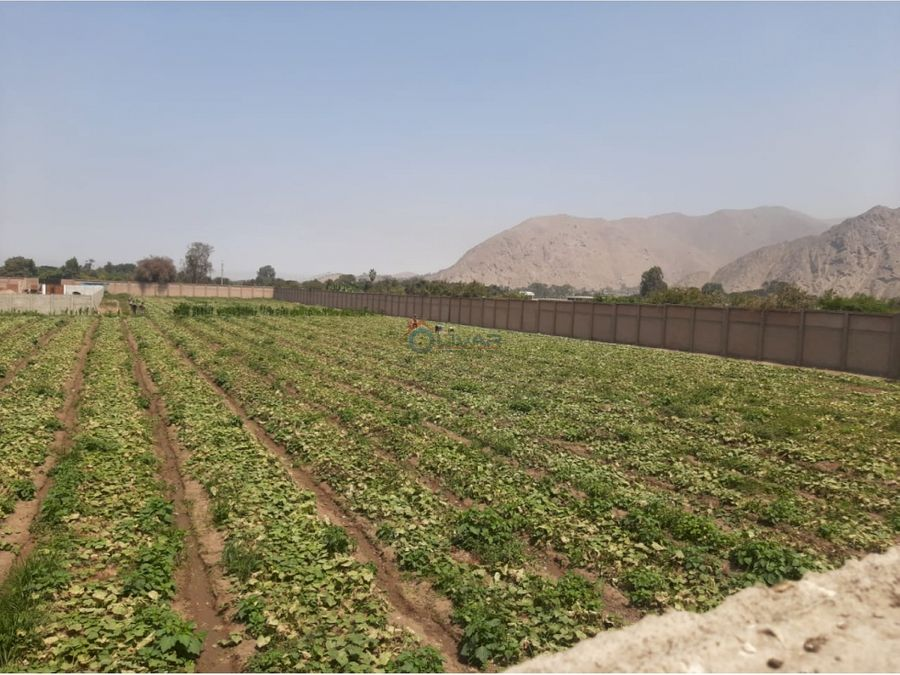 terrenos de campo en tomina pachacamac