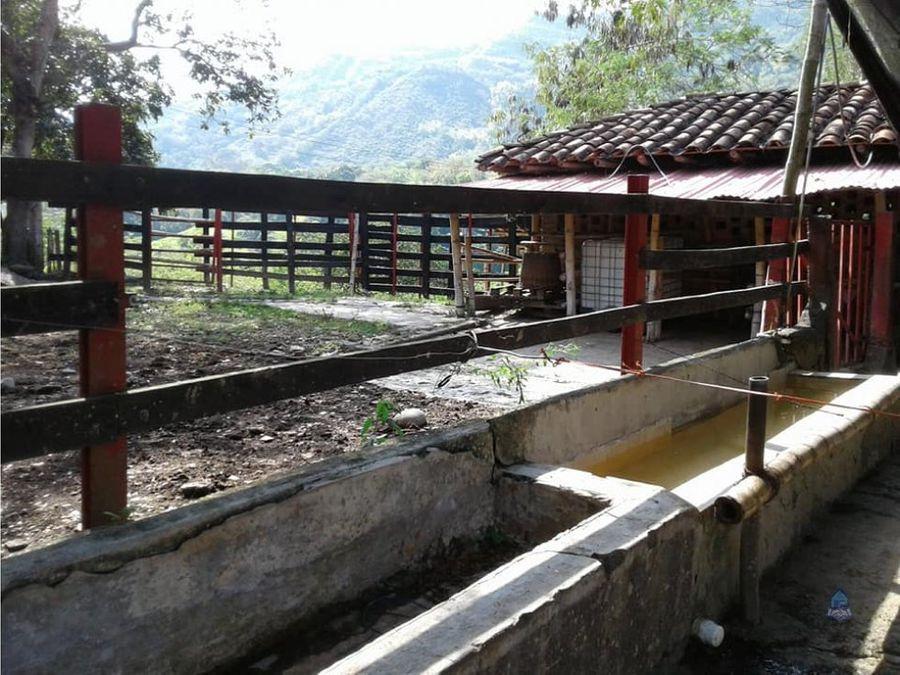 venta de finca ganadera quimbaya quindio