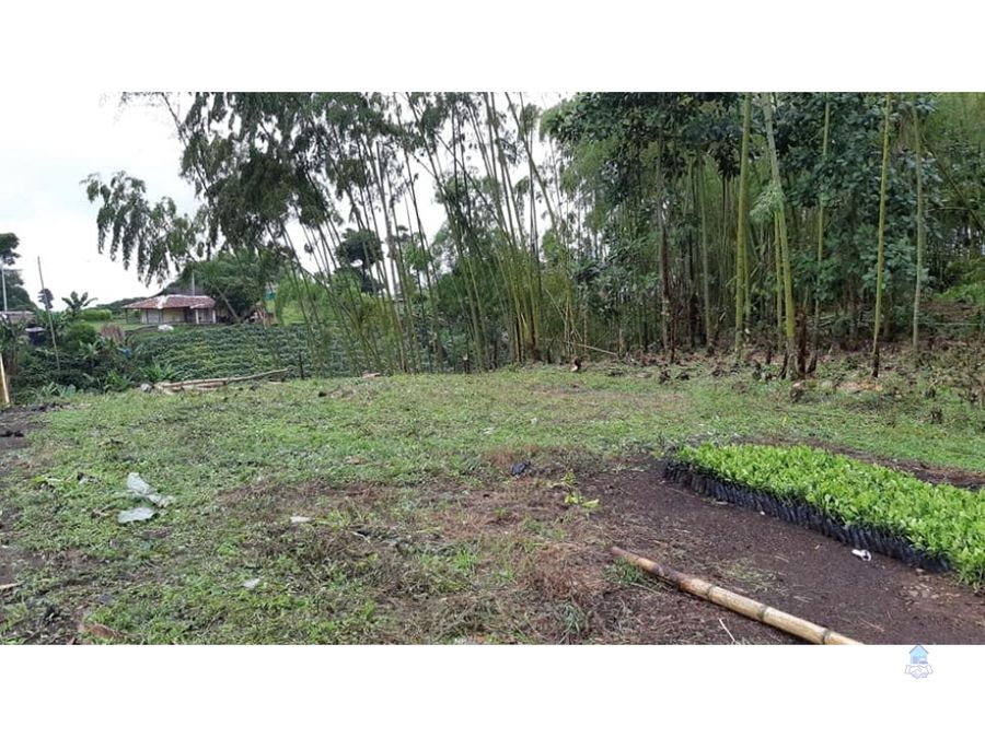 venta de lote campestre alcala quimbaya