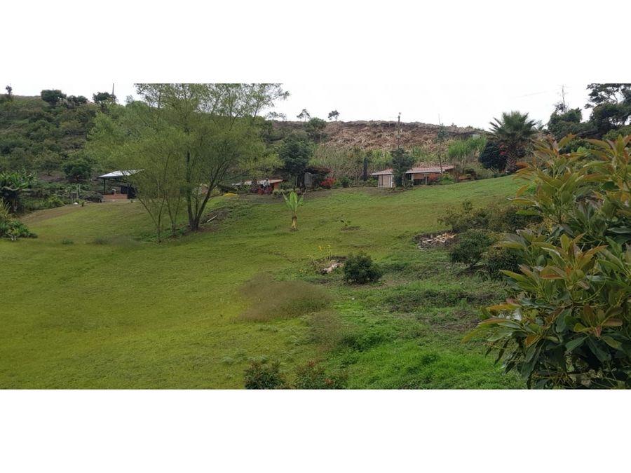 avocado production farm for sale in el santuario antioquia