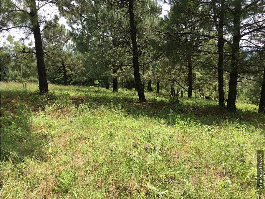 terreno san gabriel ixtla